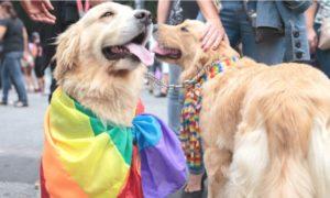 Pesquisa revela que mais de 12% de cachorros vivem em lares LGBT