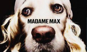 Fotógrafo viraliza com fotos de cachorro imitando Madonna